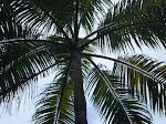 la palmera de alejandra