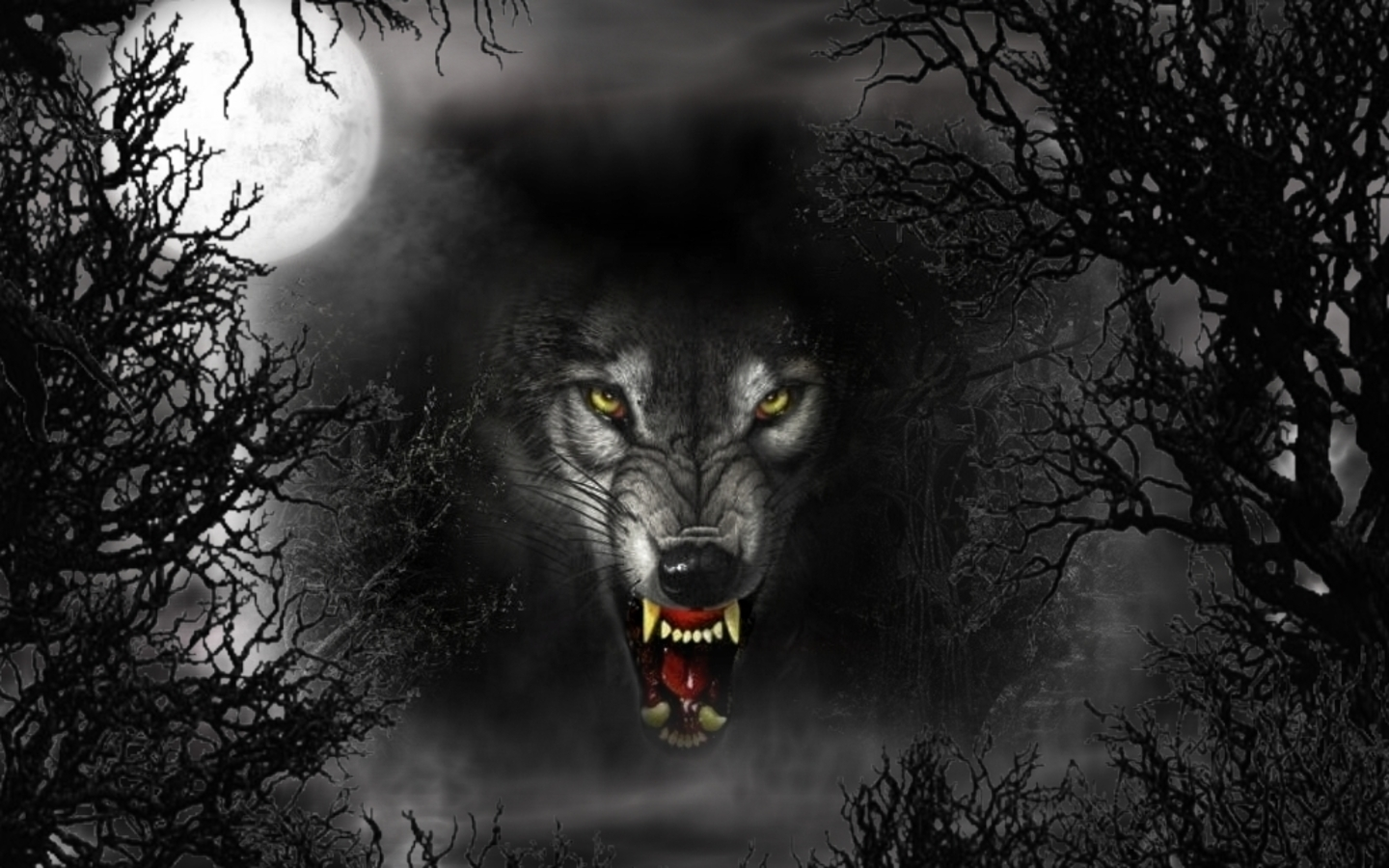 3d wallpapers black wolf