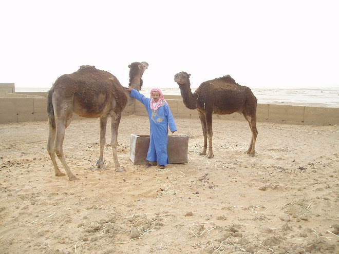 Omar and his Camels
