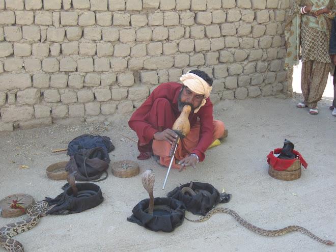 Snake Charmer in Leh