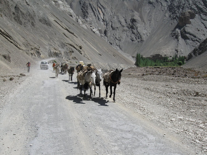 Pack Mules on the Road to Leh