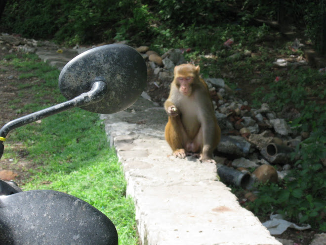 Monkey shares our lunch, well, a banana.