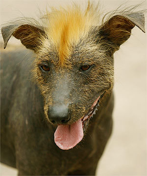 [dogs+with+MOHAWKS+for+GOD]