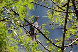 Birds of Sikkim.......