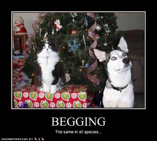 doggie  dictionary