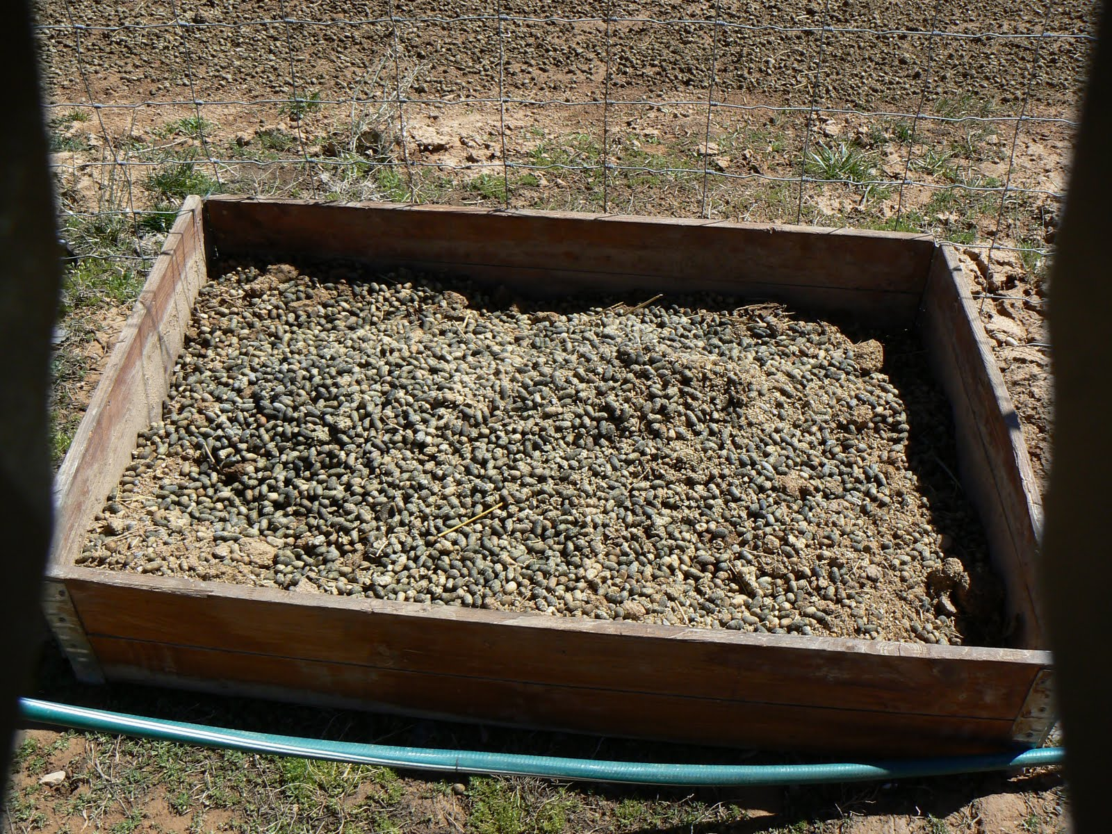 utah farm llama beans    farm