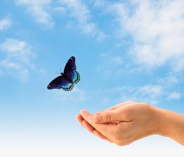 ابحث عن قلب يمنحك الضوء التفاؤل Freedom