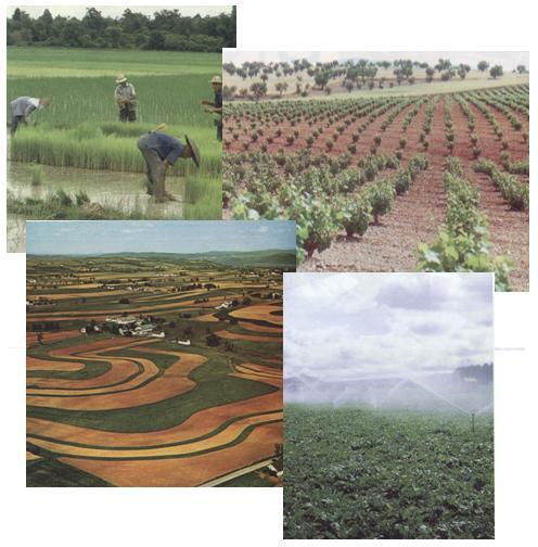 Derecho Agrario - Agricultores