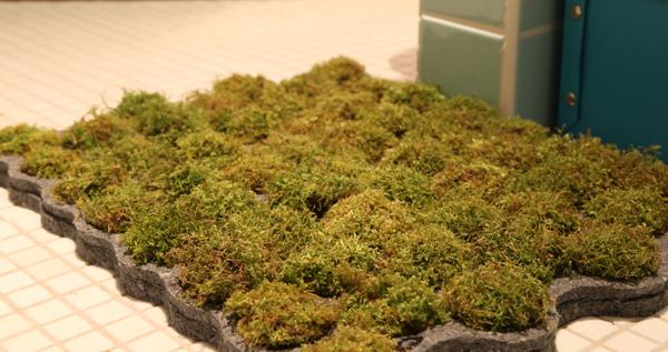 Cool bath rugs roselawnlutheran for Make a moss bath mat