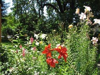 [garden_lilies_tall.jpg]