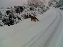 Unha nevada coma as de antes