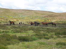 Os cabalos