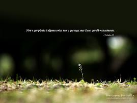 Nem o que Planta é alguma coisa, nem o que Rega, Mas Deus, que dá o  crescimento (1Corintios 3:7)