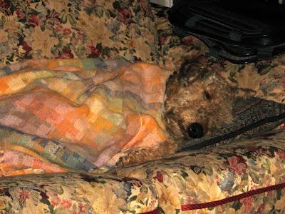 Amy asleep on the love seat