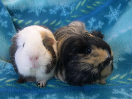 Bear and Pippin-Sanctuary Pigs from CA Rescue Wee Companions