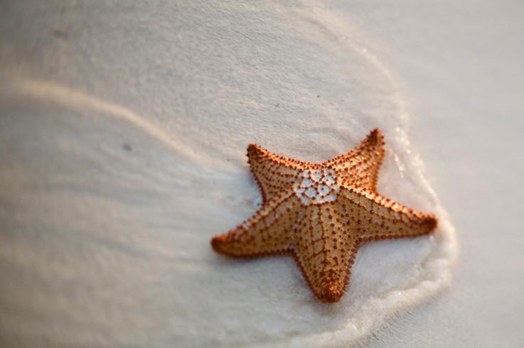 [The+Villa_Starfish.jpg]