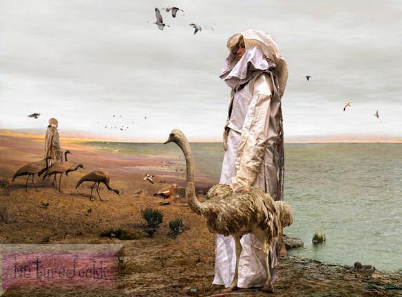 [Avant+Garde_2_Ostrich+waling+on+beach.jpeg]