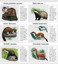 Interior-mamiferos carnivoros