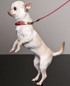 collar y correa para perros