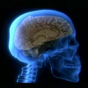 conocer el cerebro es clave para la felicidad