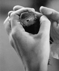 ¿el pájaro está vivo o muerto?