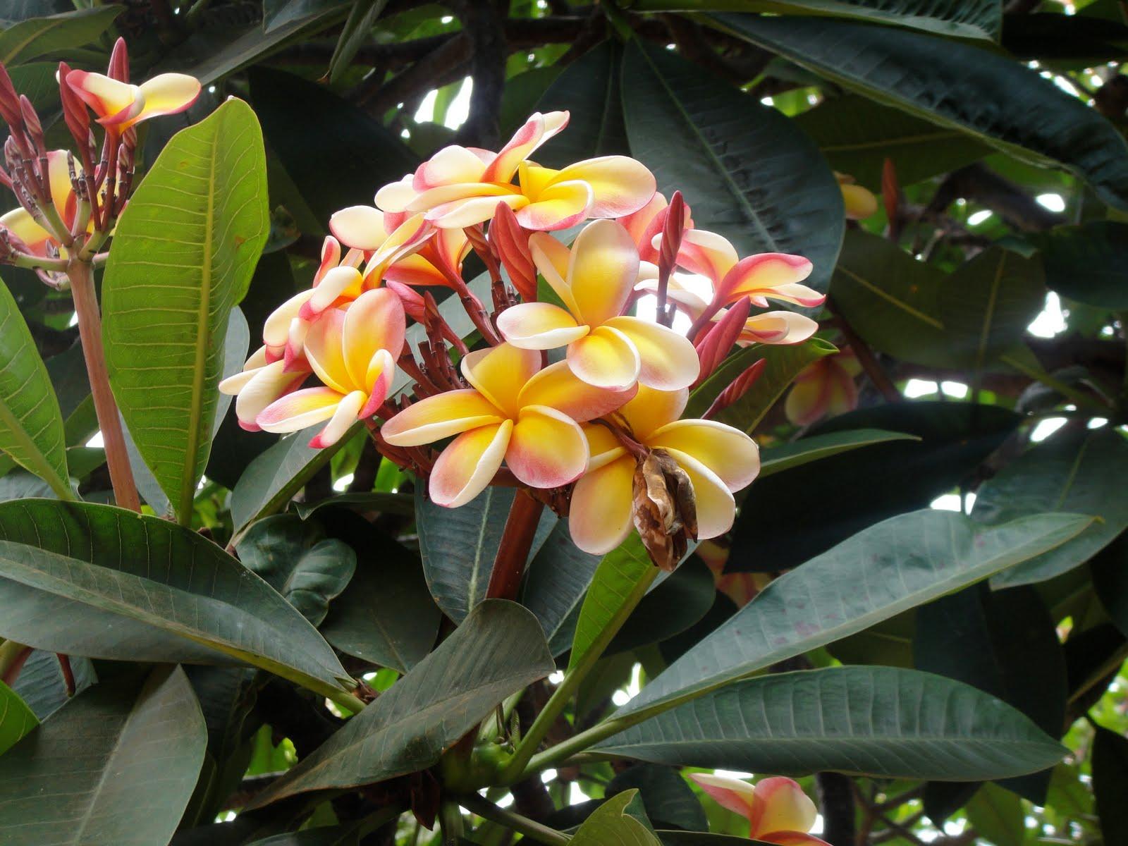 Intentando ense ar mates en new mexico hawai i me espera - Ver plantas de interior ...