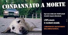 CAMPAÑA CONTRA EL ABANDONO DE ANIMALES TODO EL AÑO...