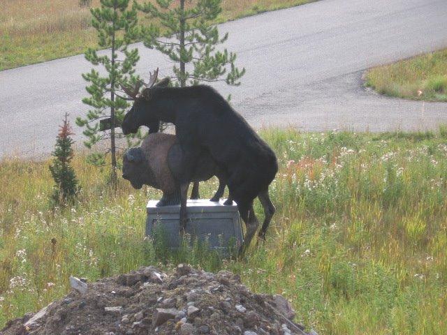 [Moose3]