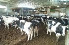 Al-Rayan Dairy