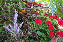 Sobe Garden