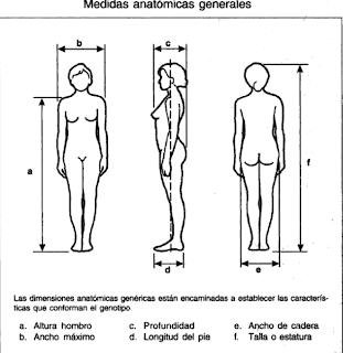 Antropometr a los mejores enlaces de la weblos mejores for Cuales son medidas antropometricas