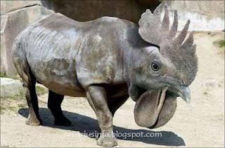 heboh !foto-foto hewan teraneh di dunia muncul - VIVAfo