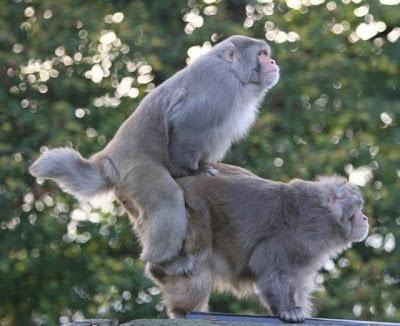 terselubung.blogspot.com