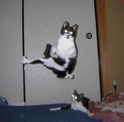 [Image: Karatecat.jpg]