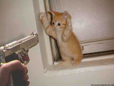 [Image: catholdup.jpg]