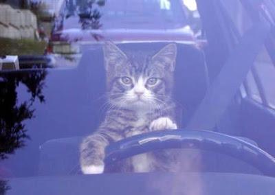 [Image: cat_driving.jpg]