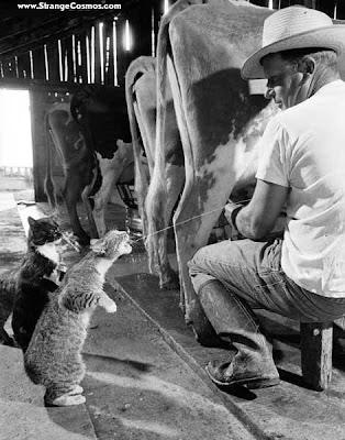 [Image: cat_milk_drinking-1.jpg]