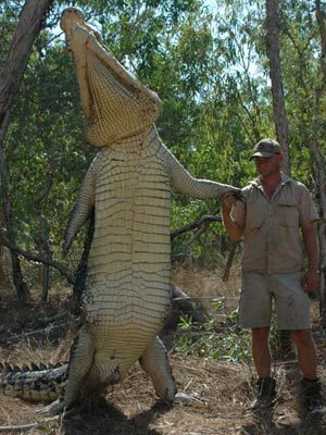 27 Foot Crocodile http://forum.bodybuilding.com/showthread.php?t=136299441&page=1