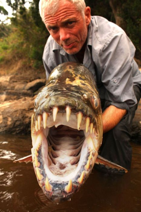 Giant Piranha Caught in Congo Rivers