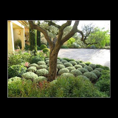 le crayon vert sainte maxime jardin au dessus de la mer. Black Bedroom Furniture Sets. Home Design Ideas