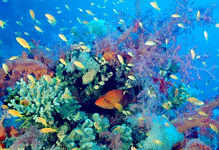 Megadiversidad de especies