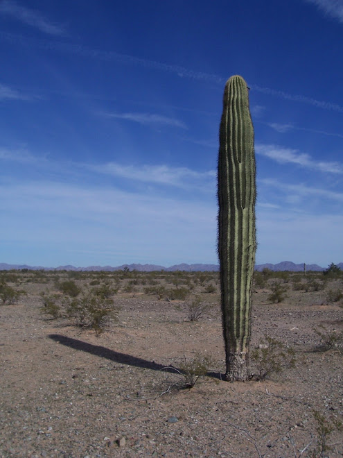 The Same Saguaro