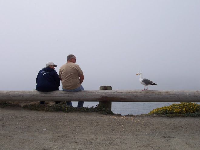 Couple With Seagull