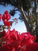 New Blossom Allison Fay Capio