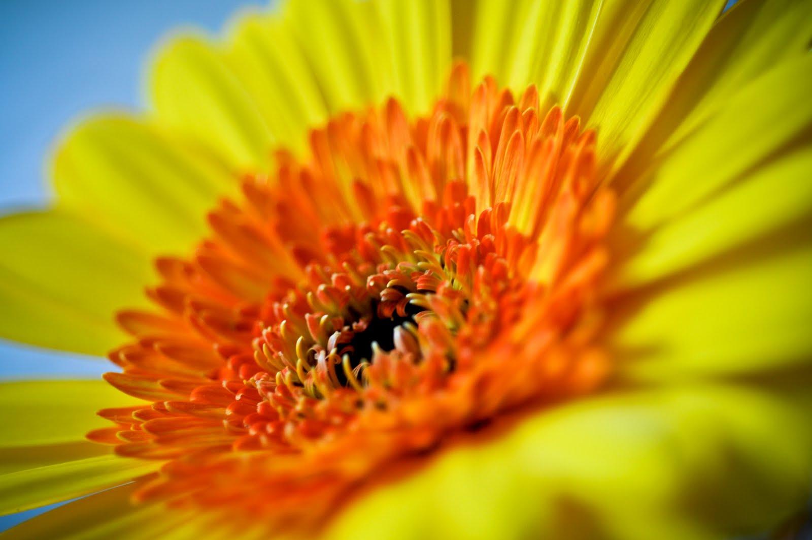 http://1.bp.blogspot.com/_6Ks7mquN8BQ/TNcXWC5b9yI/AAAAAAAAAaU/2-zsO1EA4zc/s1600/springtime.jpg