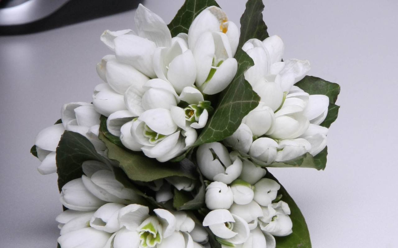 ... din europa si asia au 2 3 frunze lungi si subtiri de culoare verde