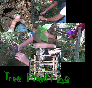 tree planting nstp Resources to secure professional services, equipment, and management, the tree planting project can fulfill its mission, respond to change and challenges, and best serve the local community.