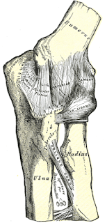 Image of an elbow