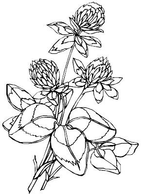 print desenhos flores para pintar grande quantidade de desenhos de
