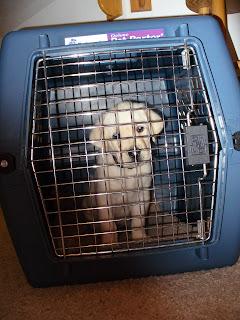 Dan in a crate
